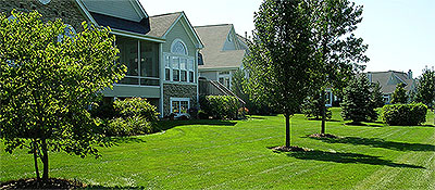 Learn more about Tree and Shrub Care
