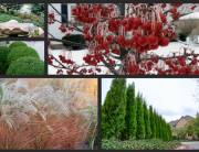 EverGreen Landscape Winter